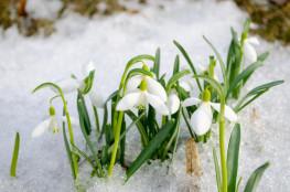 Скидки на снегоступы!
